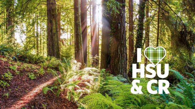 I HSU & CR forest