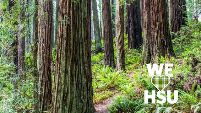 We love HSU Forest path