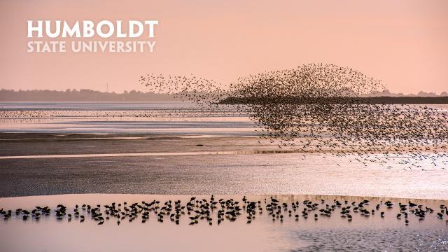 Birds at Beach zoom background